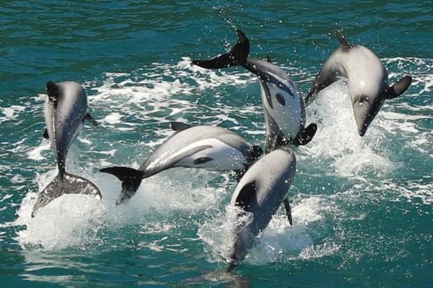 Una Manada de delfines de Héctor